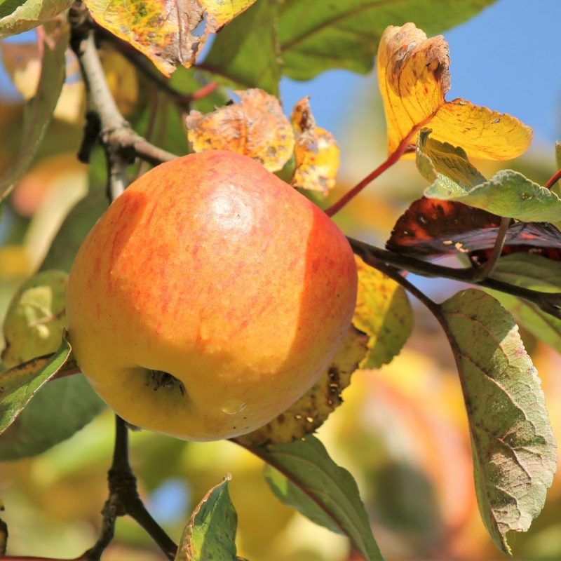 autumn-1201013_1920