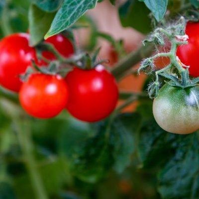 tomatoes-5577039_1920